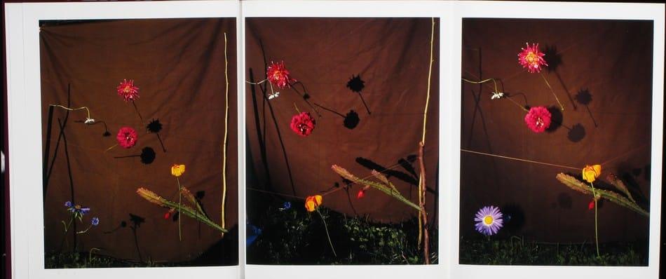 Blumen_04.jpg
