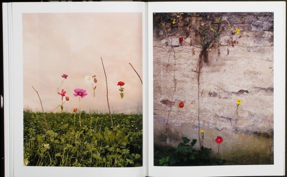 Blumen_07.jpg