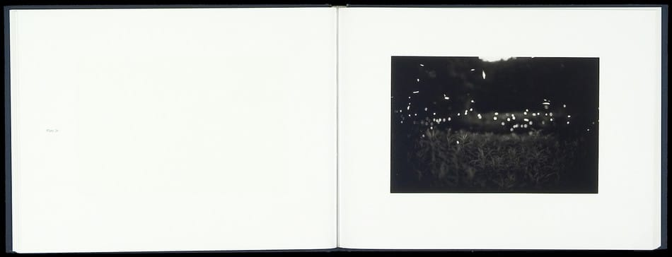 Fireflies_03.jpg