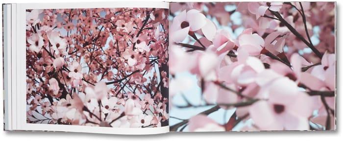 Blossom_07