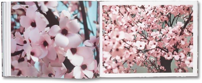 Blossom_08