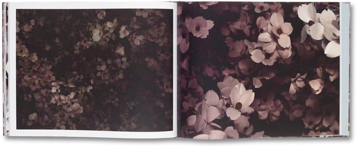 Blossom_13
