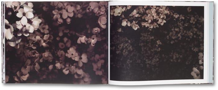 Blossom_14
