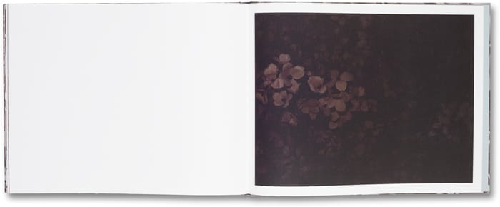Blossom_16